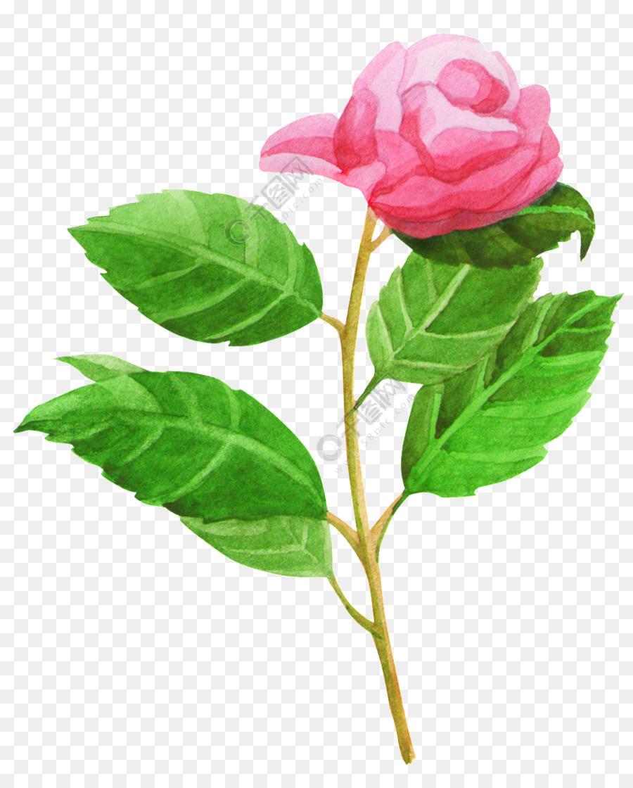 Descarga gratuita de Las Rosas De Jardín, Rosa Beach, Col Rosa Imágen de Png