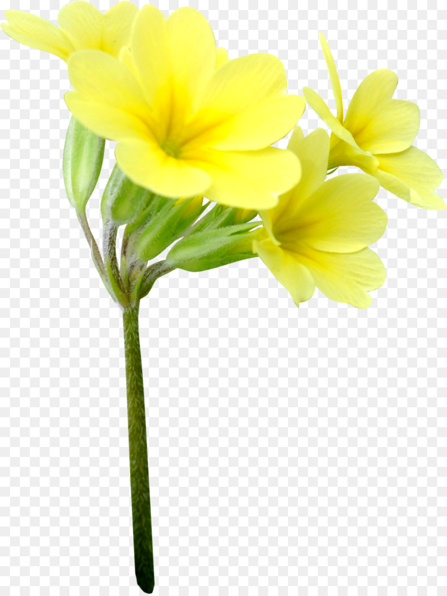 Descarga gratuita de Flor, Las Flores Cortadas, Floristry Imágen de Png