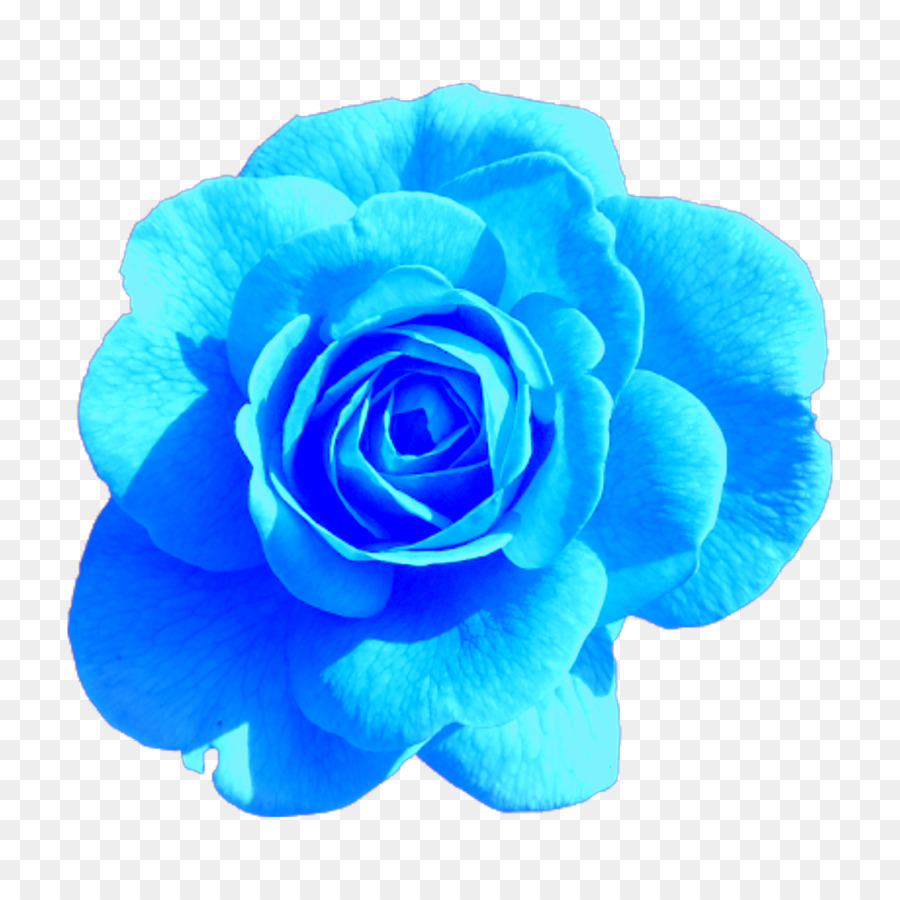 Descarga gratuita de Rosa, Flores De Color Rosa, Las Rosas De Jardín imágenes PNG