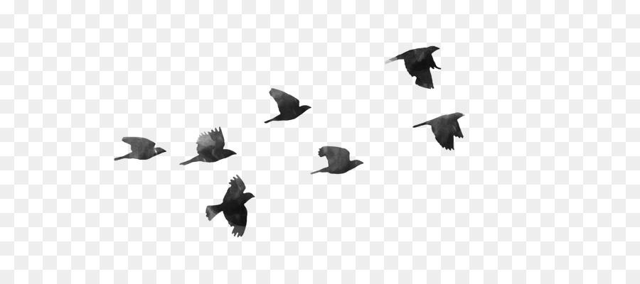Descarga gratuita de Aves, Fondo De Escritorio, Vuelo Imágen de Png