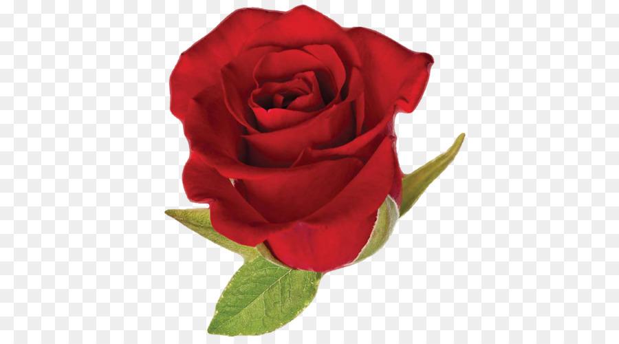 Descarga gratuita de Rosa, Rojo, Rosas Rojas Imágen de Png