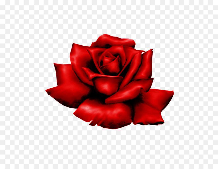 Descarga gratuita de Las Rosas De Jardín, Rosa, Flor imágenes PNG