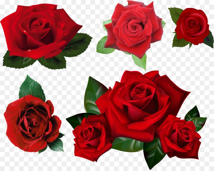 Descarga gratuita de Rosa, Fondo De Escritorio, Flor Imágen de Png
