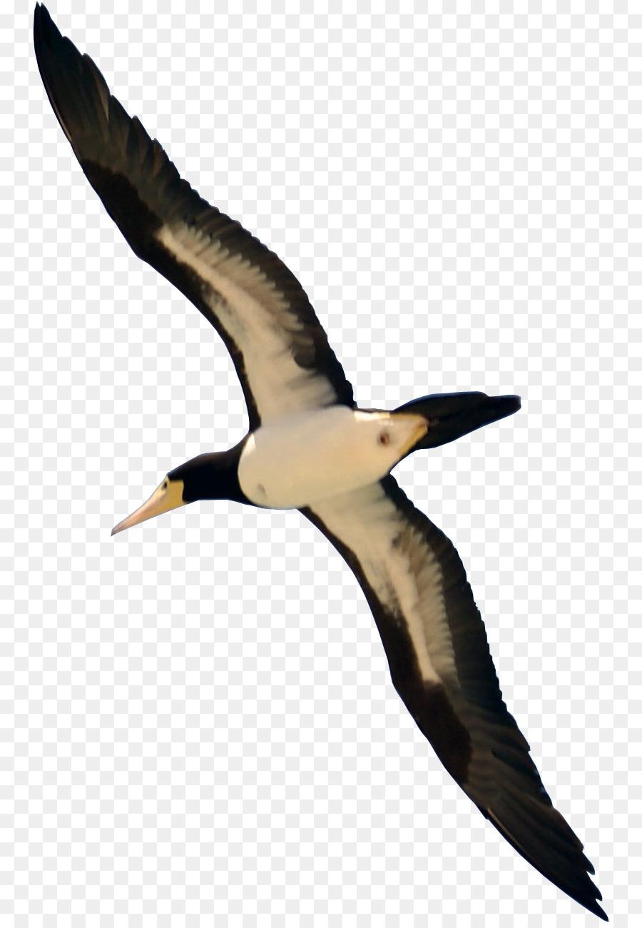 Descarga gratuita de Aves, Las Palomas Y Las Palomas, Fondo De Escritorio Imágen de Png