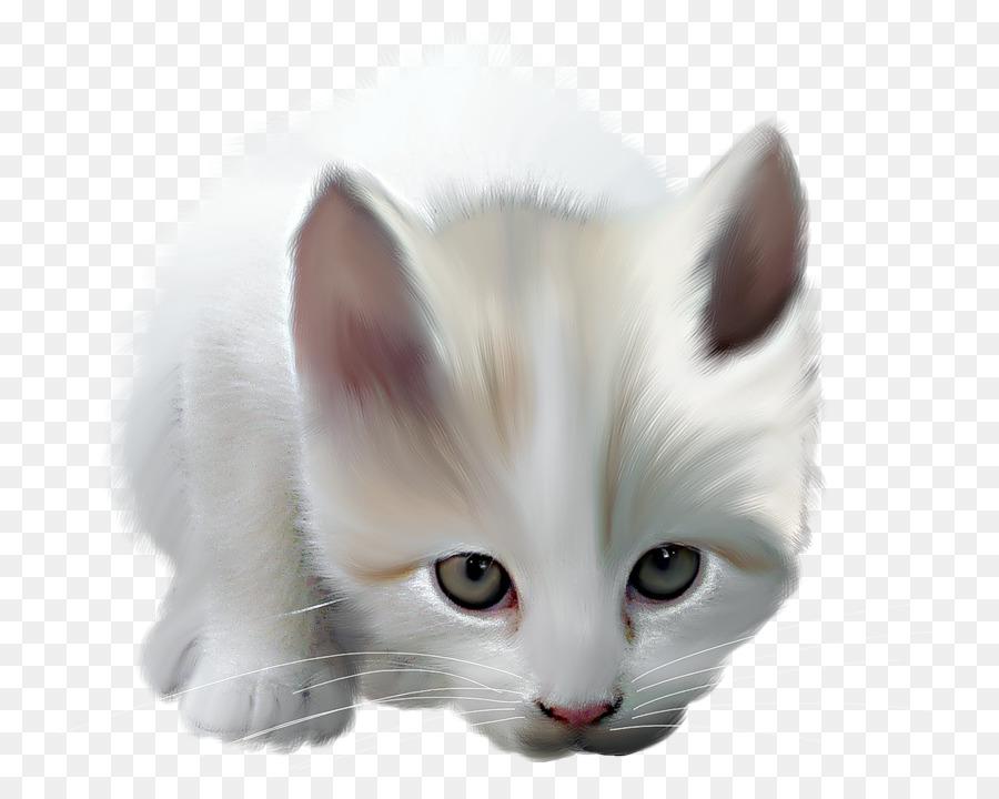Descarga gratuita de Maine Coon, Brasileño De Pelo Corto, Gato Persa imágenes PNG