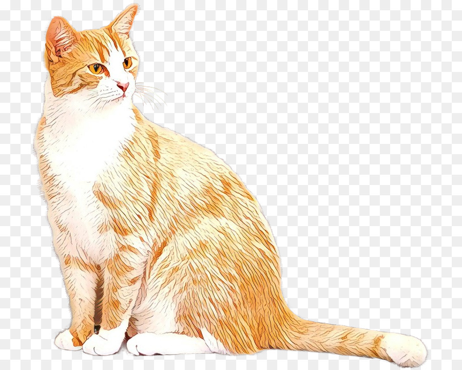 Descarga gratuita de Europeo De Pelo Corto, Australia Niebla, Manx Cat imágenes PNG