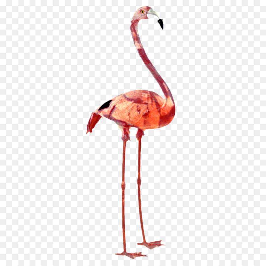 Descarga gratuita de De Plástico Flamingo, Flamingo, Aves imágenes PNG