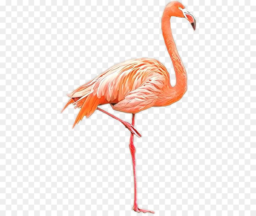 Descarga gratuita de Aves, American Flamingo, Flamenco Imágen de Png