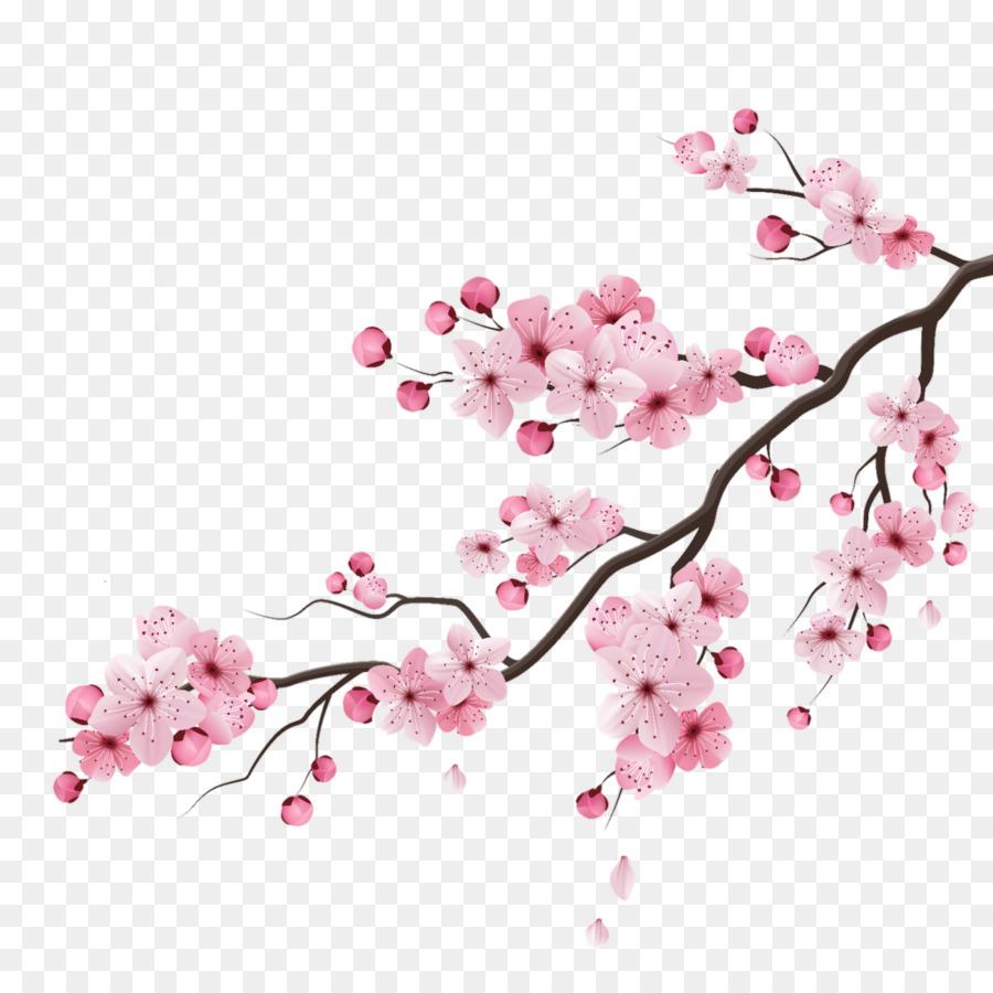 Descarga gratuita de De Los Cerezos En Flor, Flor, Dibujo Imágen de Png