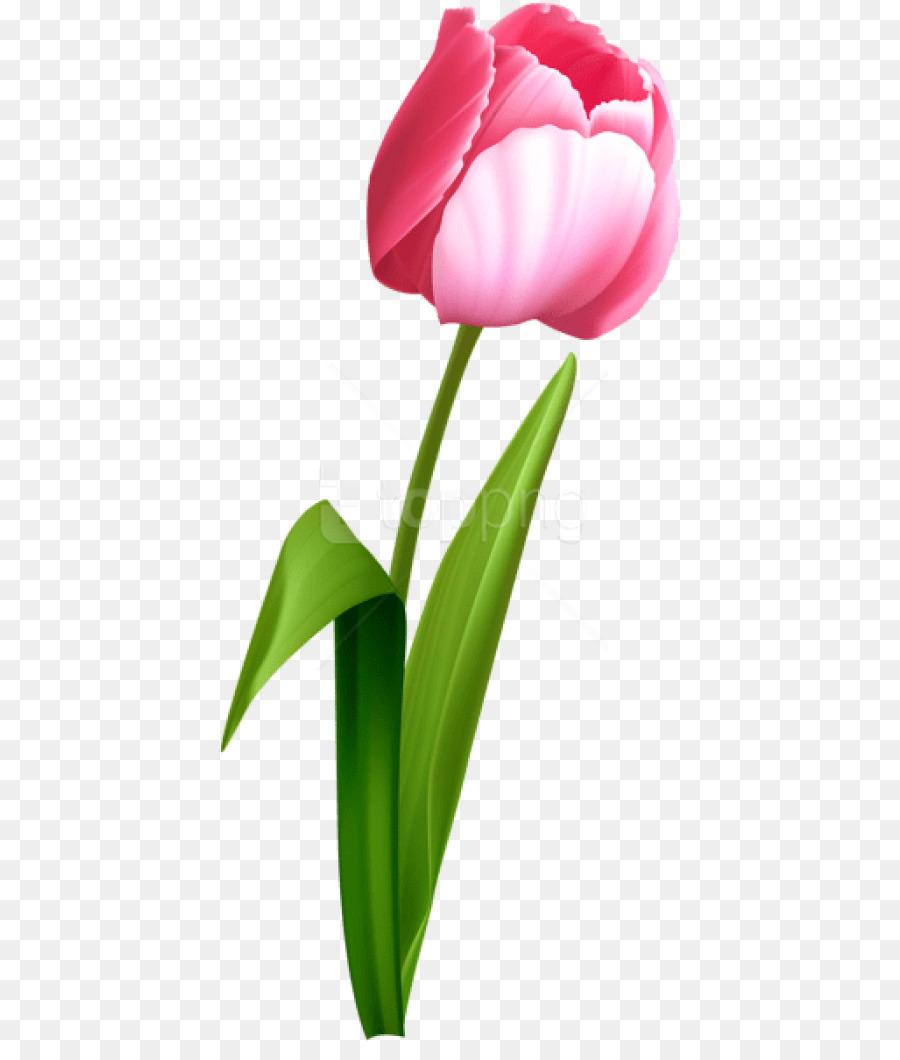 Descarga gratuita de Tulip, Flor, Flores De Color Rosa imágenes PNG