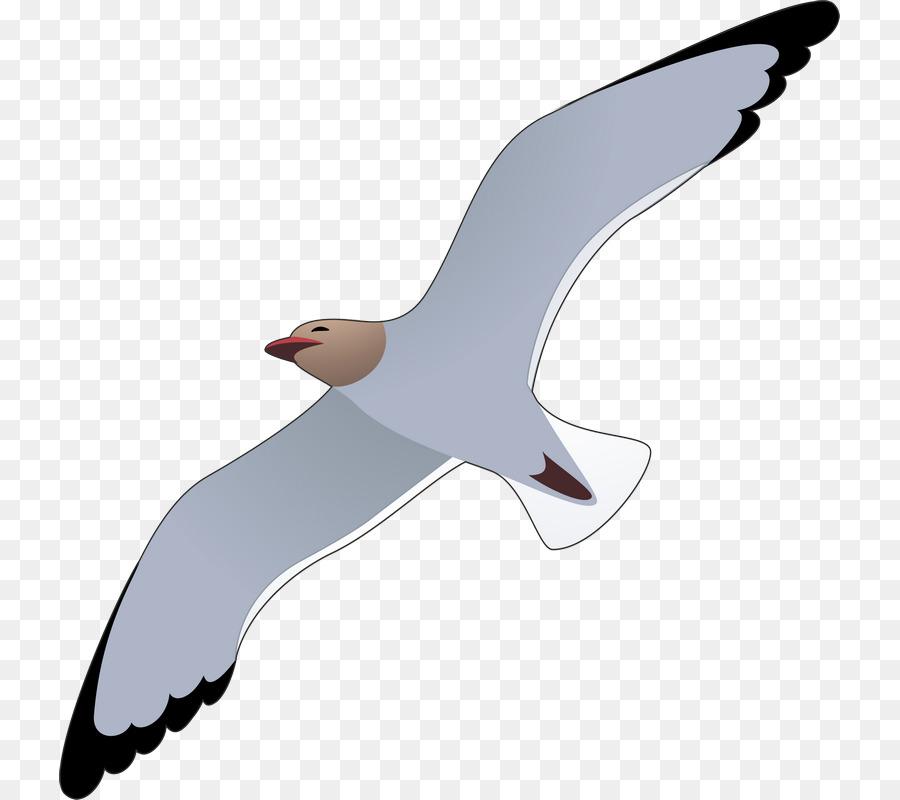 Descarga gratuita de Las Gaviotas, Europea De La Gaviota, Aves Imágen de Png