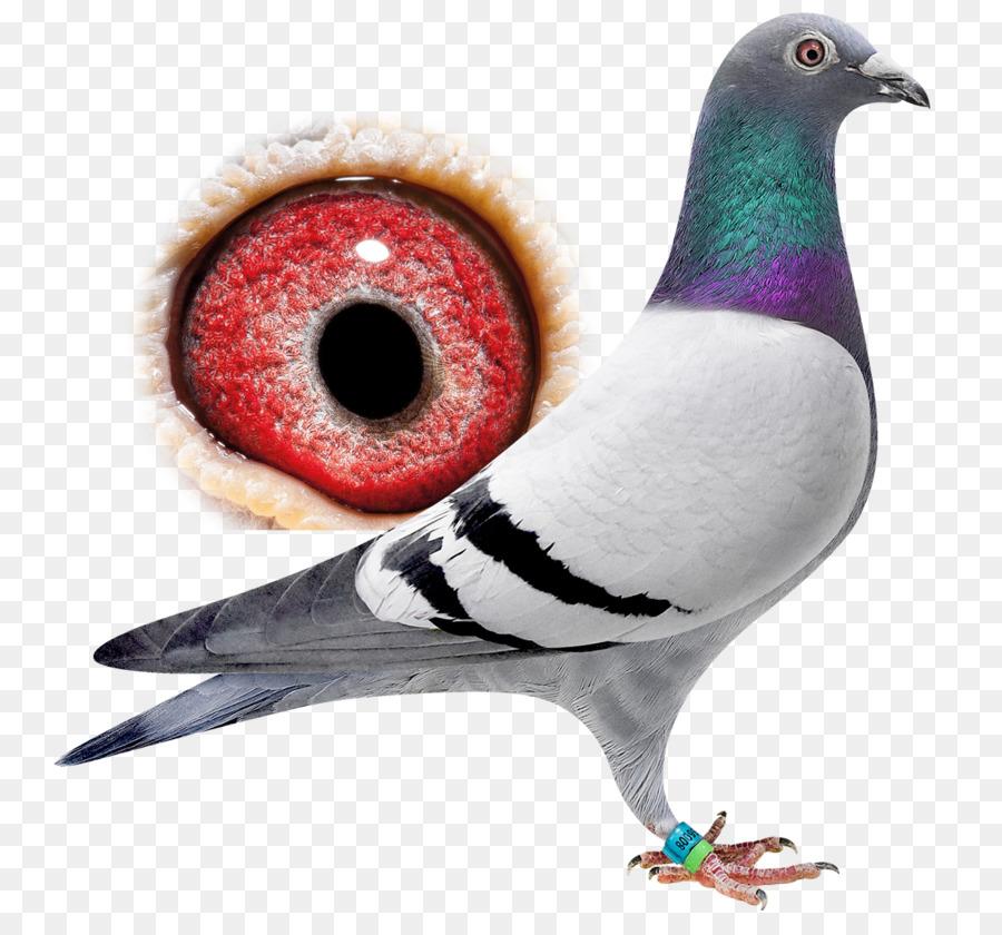 Descarga gratuita de Las Palomas Y Las Palomas, Aves, Viajes Imágen de Png