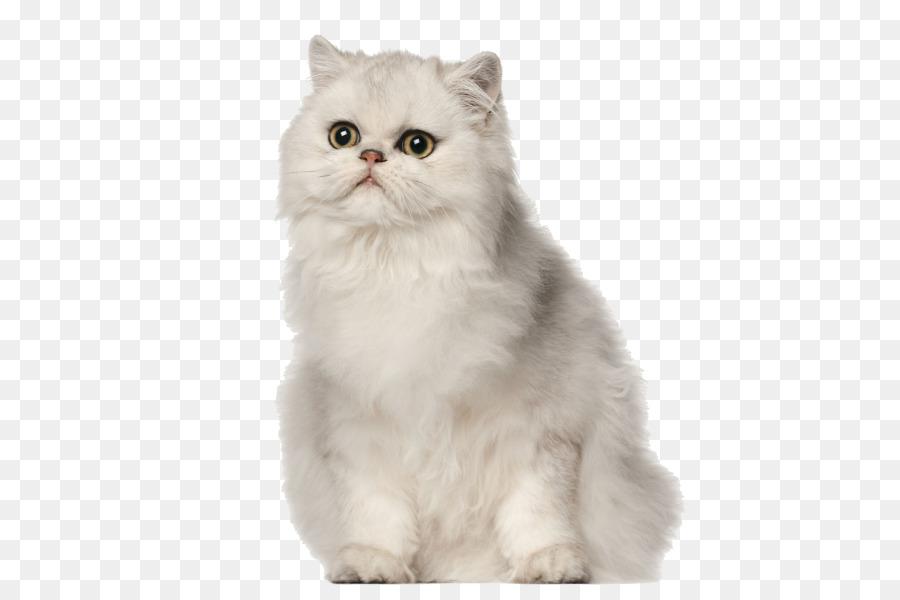 Descarga gratuita de Gato Persa, Una Fotografía De Stock, Perro Imágen de Png