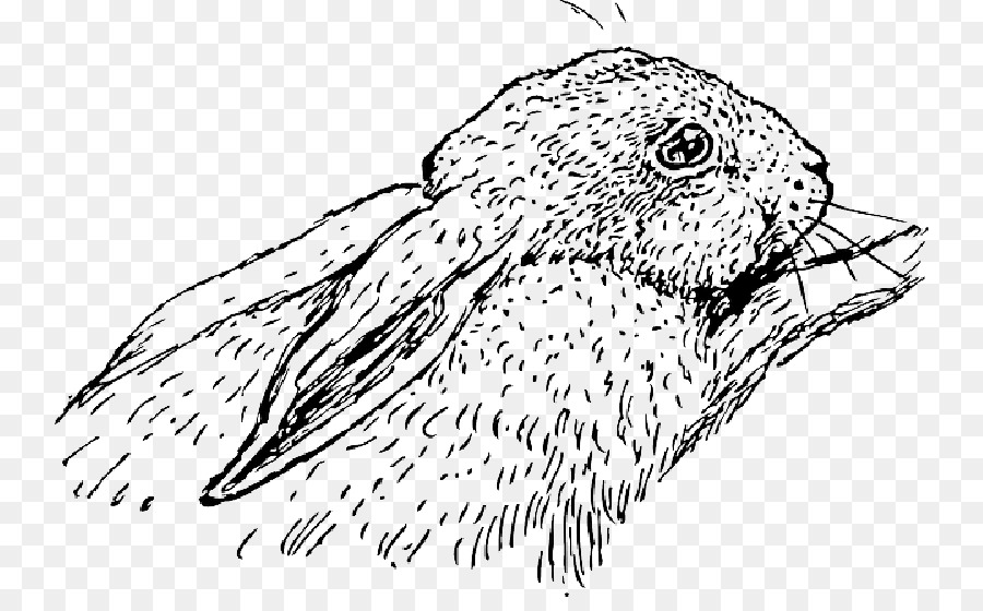 Descarga gratuita de La Liebre, Nacionales De Conejo, Holland Lop imágenes PNG