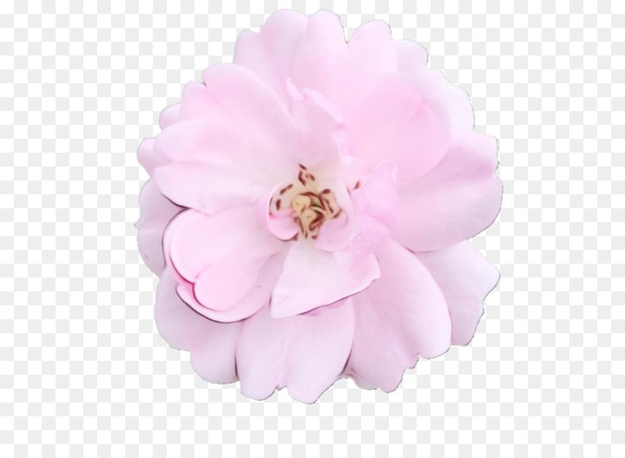 Descarga gratuita de Col Rosa, Pastel, Rosa Imágen de Png