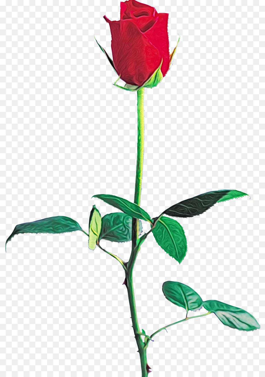 Descarga gratuita de Las Rosas De Jardín, Rosa Beach, Pétalo Imágen de Png