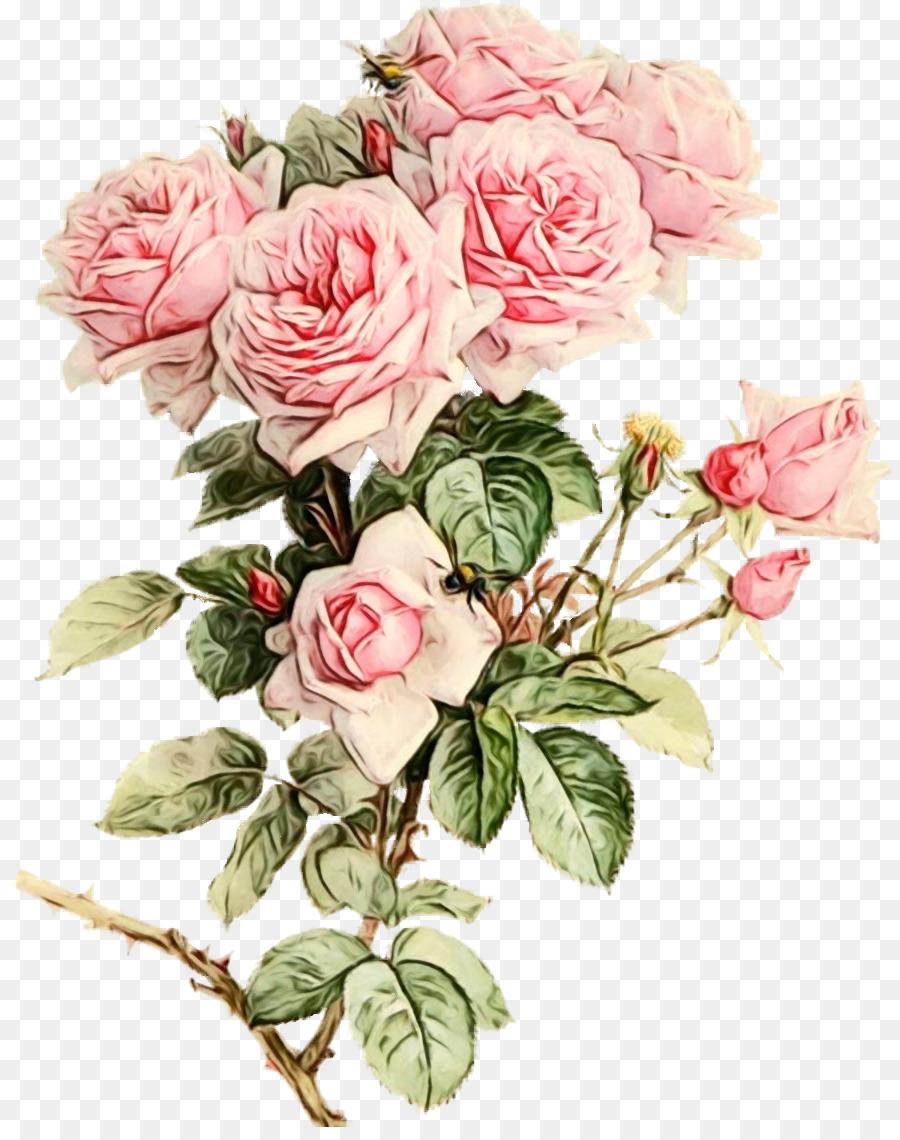 Descarga gratuita de Pintura A La Acuarela, Las Rosas De Jardín, Rosa Imágen de Png