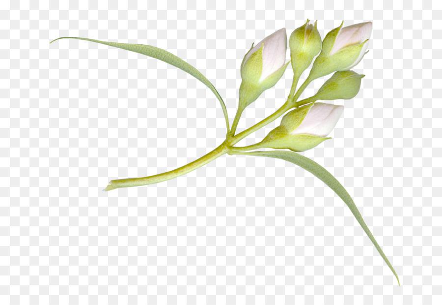 Descarga gratuita de Flor, Pintura, Tulip imágenes PNG