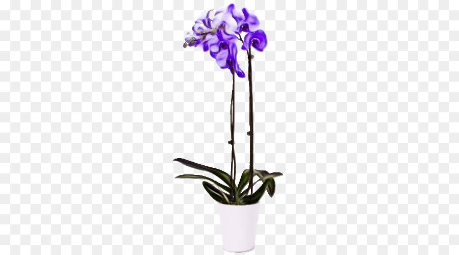 Descarga gratuita de Las Orquídeas, La Polilla De Las Orquídeas, Singapur Orquídea Imágen de Png