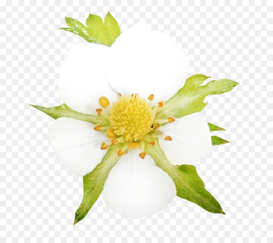 Descarga gratuita de Flor, Pintura, Pétalo imágenes PNG