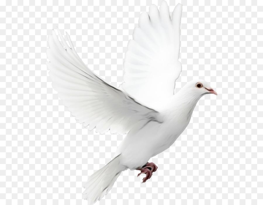 Descarga gratuita de Las Palomas Y Las Palomas, Aves, Paloma Mensajera Imágen de Png
