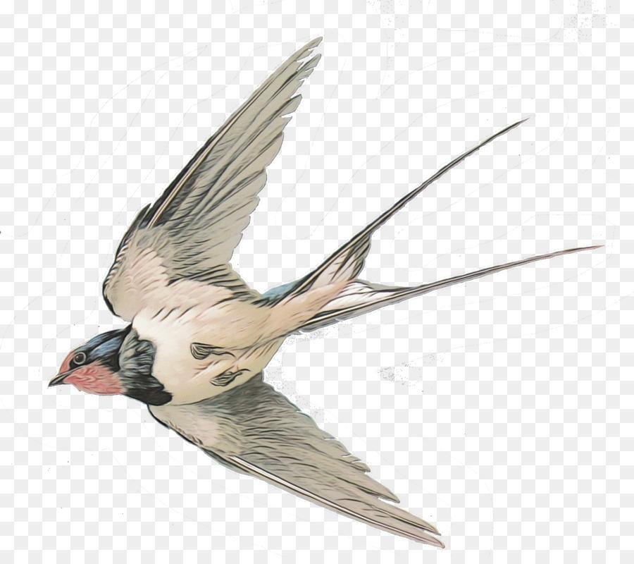 Descarga gratuita de Tragar, Aves, Gorrión imágenes PNG