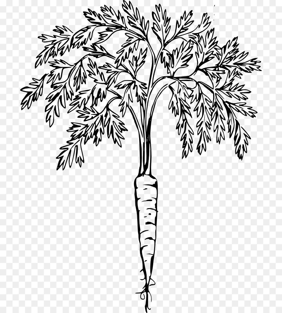 Zanahoria Dibujo Arte De Linea Imagen Png Imagen Transparente Descarga Gratuita Dibujos de zanahoria para pintar. zanahoria dibujo arte de linea imagen