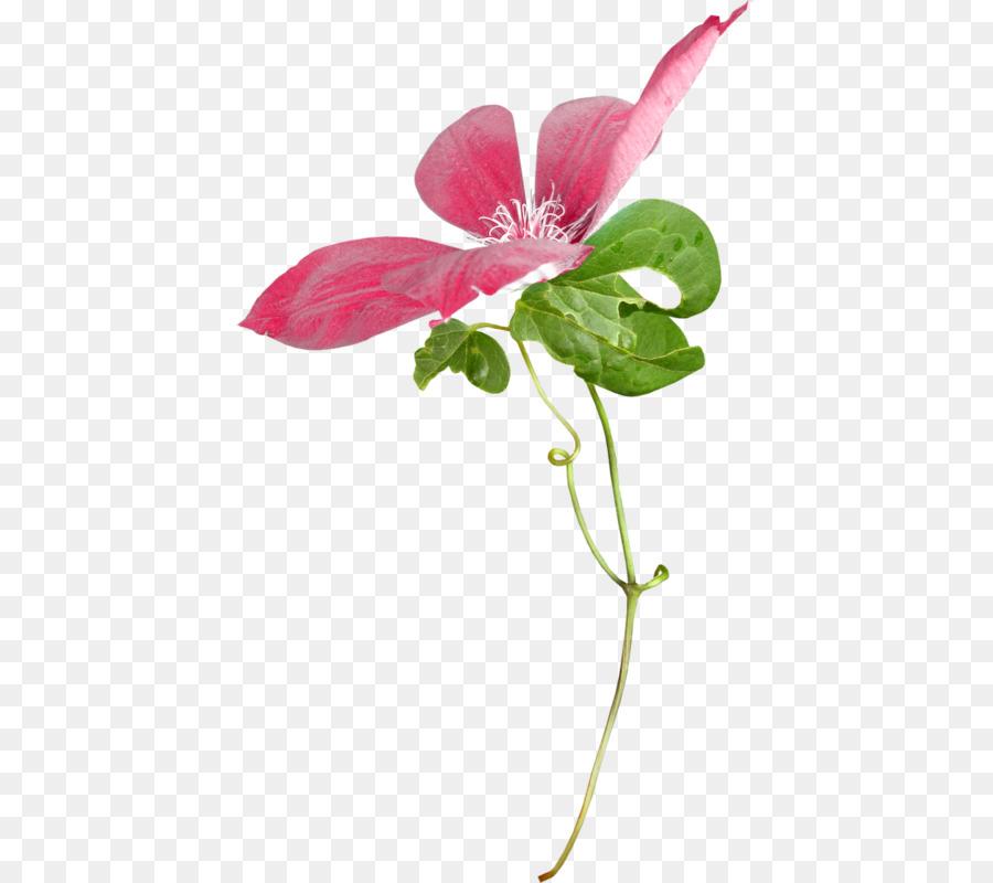 Descarga gratuita de Las Flores Cortadas, Flor, Flores Silvestres imágenes PNG