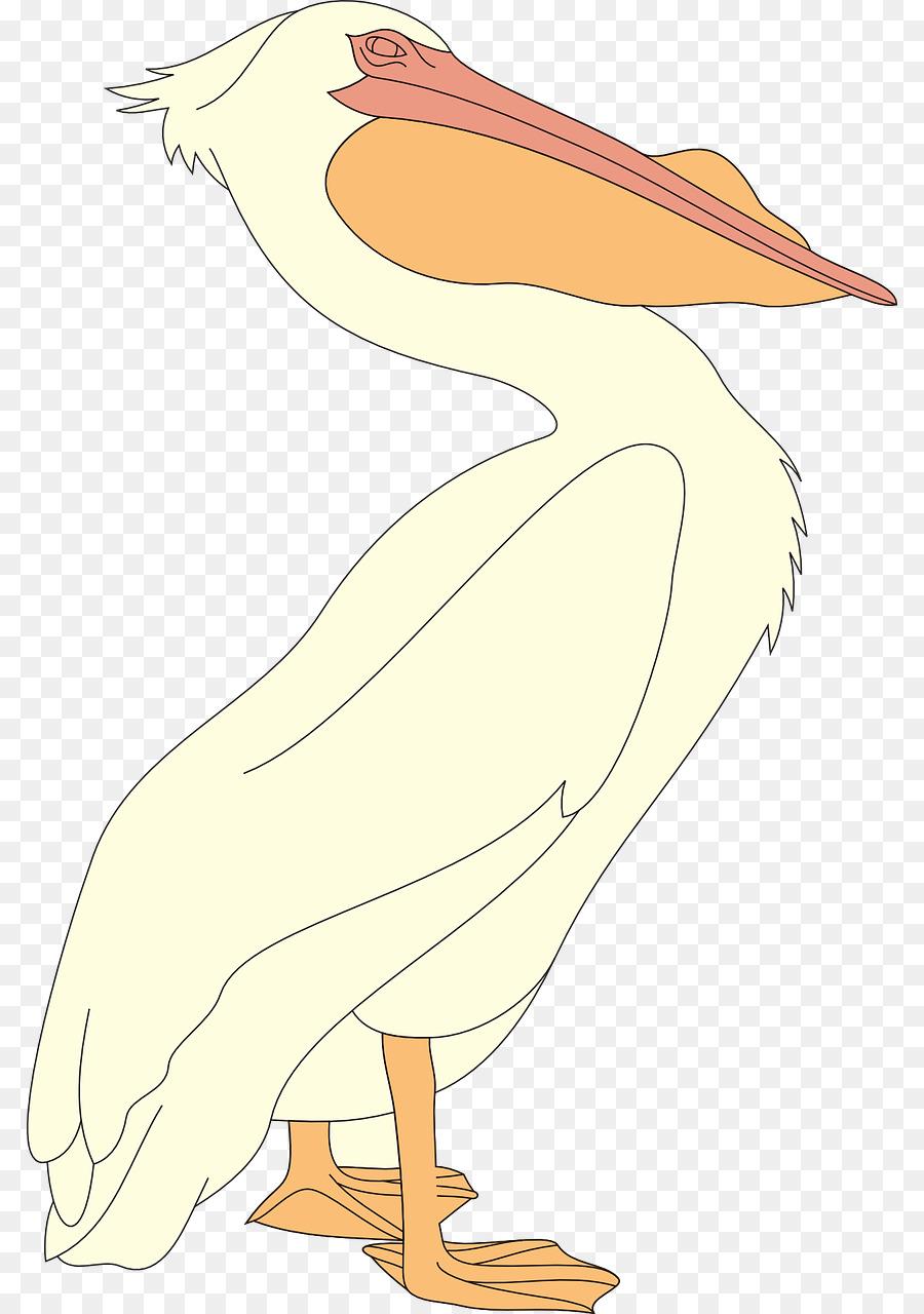 Descarga gratuita de Pelican, Aves, Pico Imágen de Png