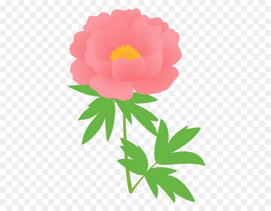 Descarga gratuita de Las Rosas De Jardín, Peonía, Moutan Peonía Imágen de Png