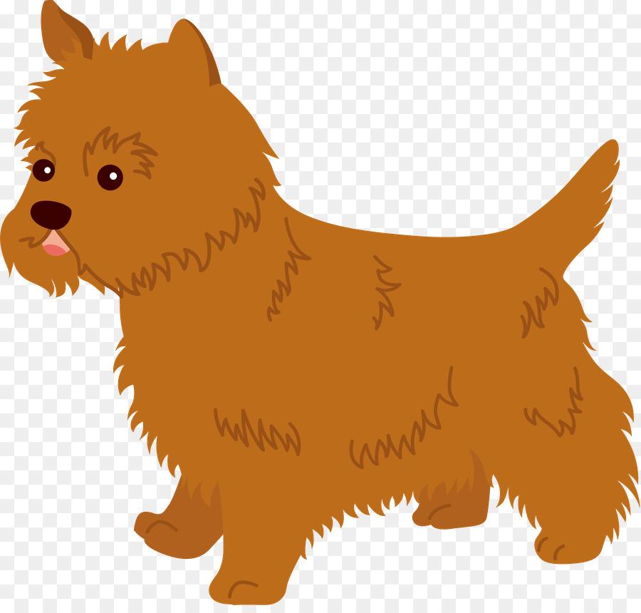 Descarga gratuita de Norwich Terrier, El Cairn Terrier, Norfolk Terrier imágenes PNG