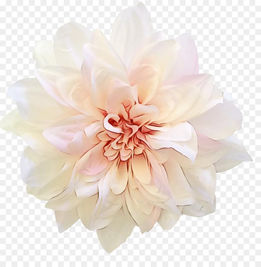 Descarga gratuita de Rosa, Fucsia, Flor Imágen de Png