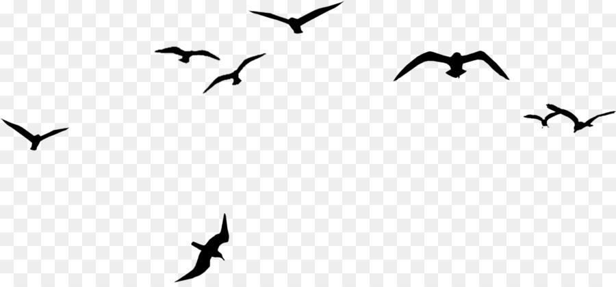 Descarga gratuita de Aves, águila Calva, Ganso Imágen de Png