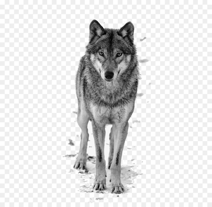 Descarga gratuita de Lobo Negro, El Lobo ártico, El Malamute De Alaska imágenes PNG