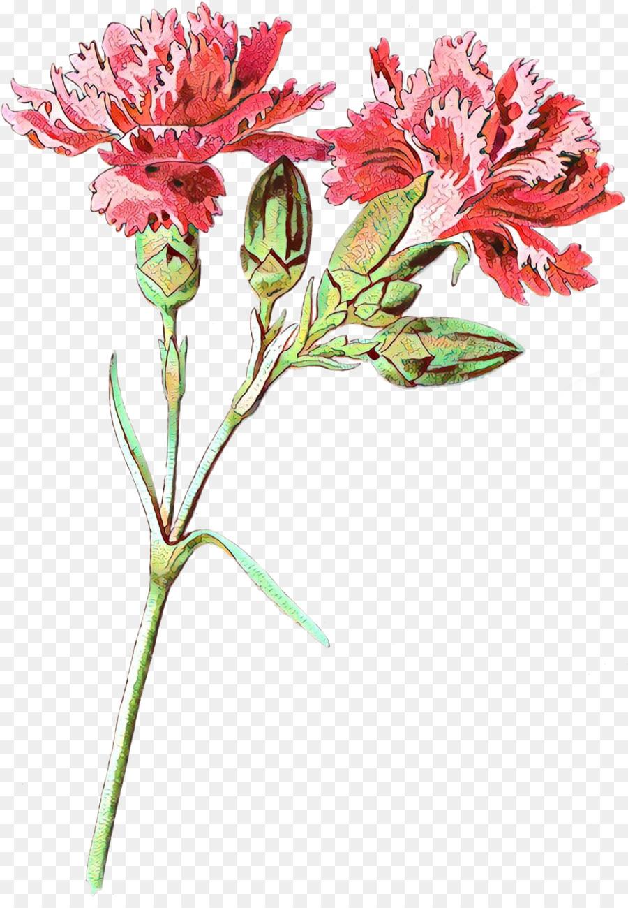 Descarga gratuita de El Lirio De Los Incas, Clavel, Las Flores Cortadas Imágen de Png