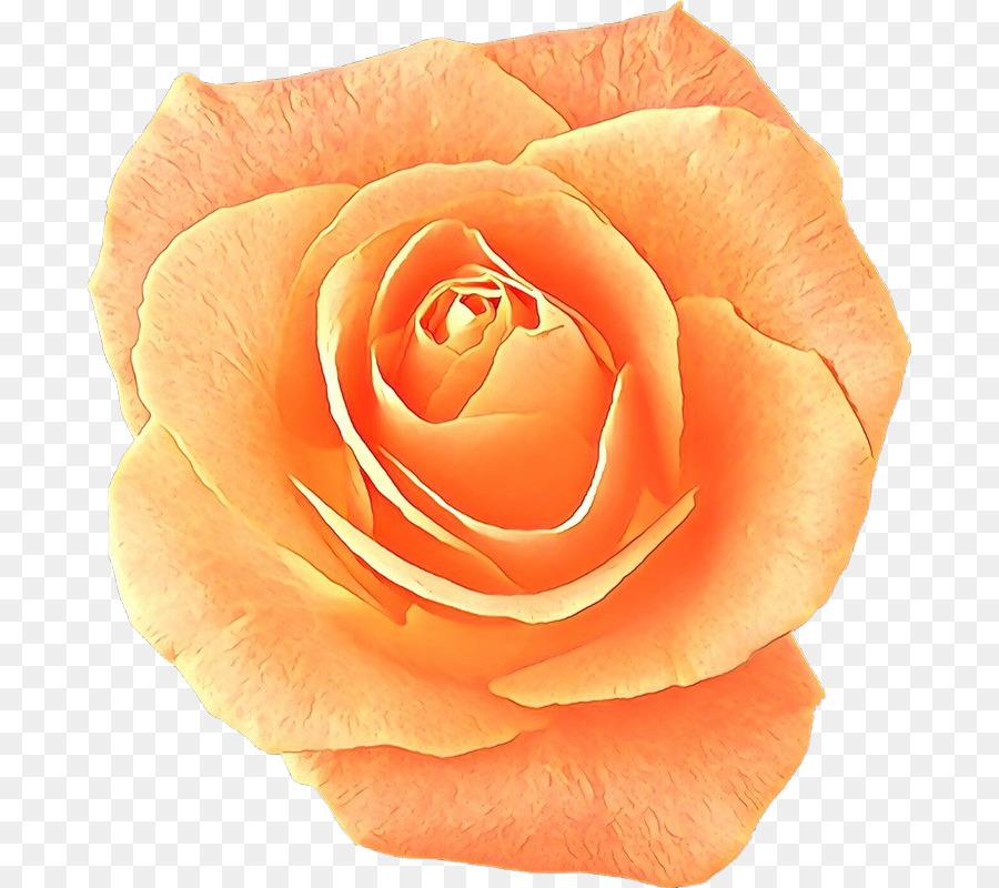 Descarga gratuita de Las Rosas De Jardín, China Rose, Rosa Beach Imágen de Png