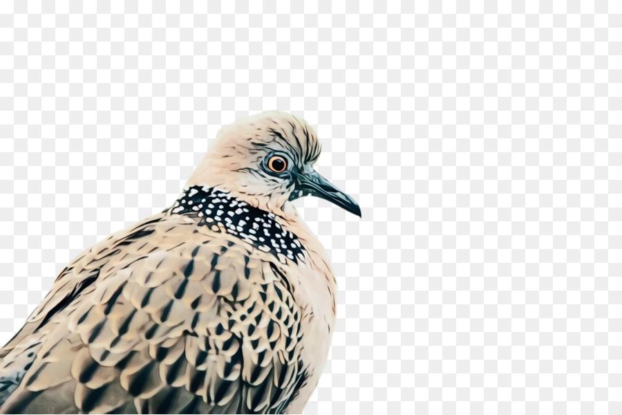 Descarga gratuita de Pico, Aves, Las Palomas Y Las Palomas Imágen de Png