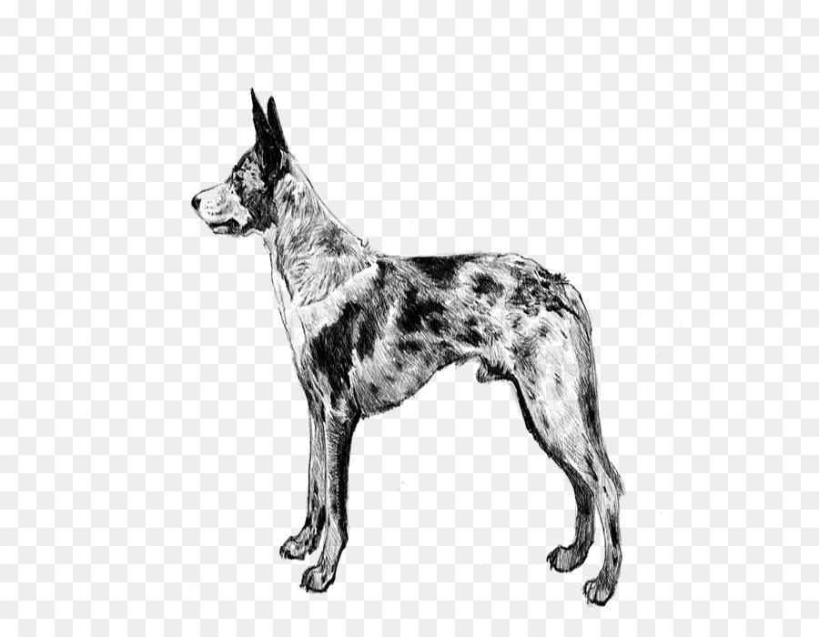 Descarga gratuita de Seppala Siberiano Sleddog, Perro Australiano Del Ganado, Koolie imágenes PNG