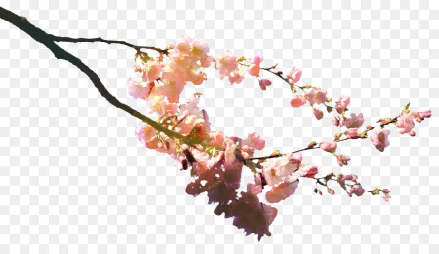Descarga gratuita de De Los Cerezos En Flor, Flor, Bento Imágen de Png