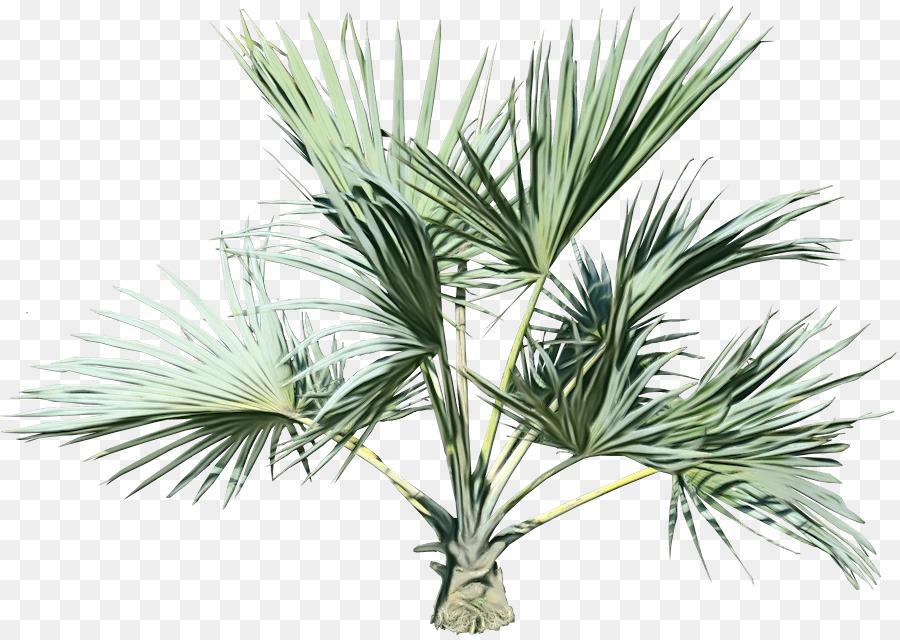 Descarga gratuita de Saw Palmetto, Los árboles De Palma, Asiático Palmira Palma imágenes PNG
