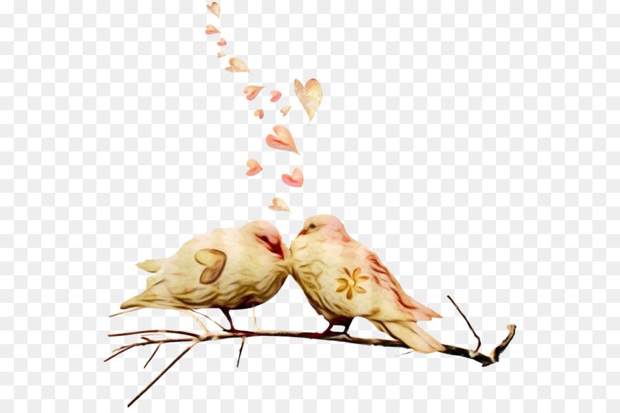 Descarga gratuita de Pollo, Todavía Vida La Fotografía, Todavía La Vida imágenes PNG