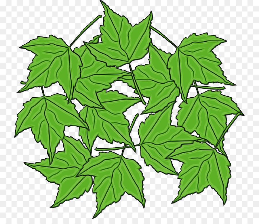 Descarga gratuita de Plano De árboles, Tallo De La Planta, Rama imágenes PNG