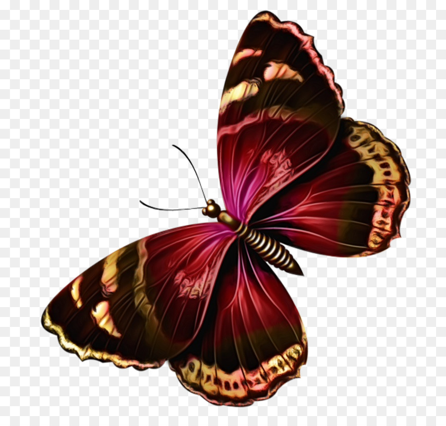 Descarga gratuita de Brushfooted Mariposas, Mariposa, La Polilla imágenes PNG