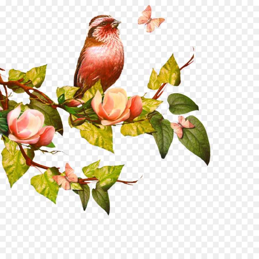 Descarga gratuita de Rama, Techo, árbol Imágen de Png