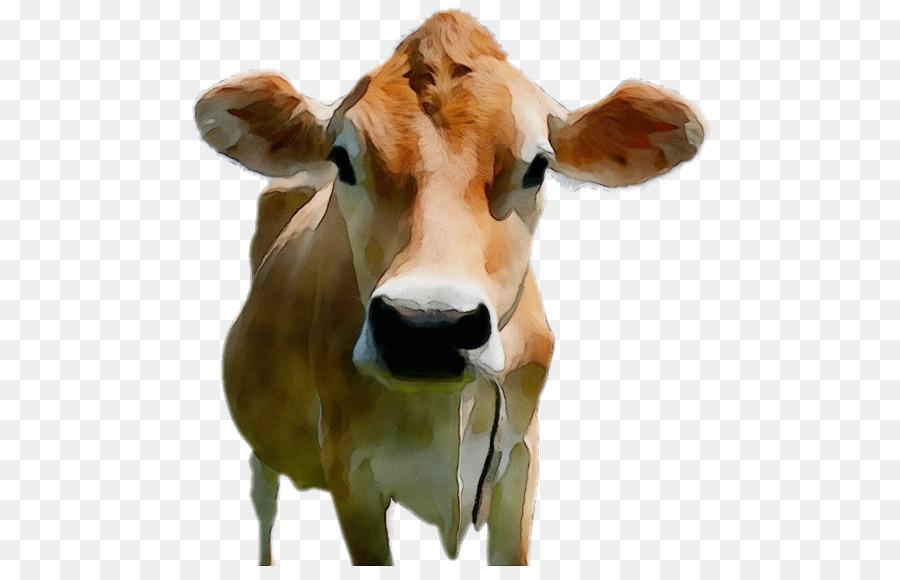 Descarga gratuita de Ganado Holstein Friesian, Brown Swiss Ganado, El Ganado Jersey imágenes PNG