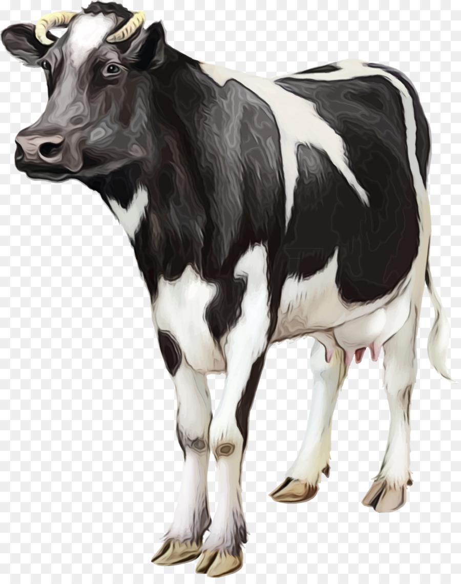 Descarga gratuita de Vaca, Ganado Holstein Friesian, Becerro imágenes PNG