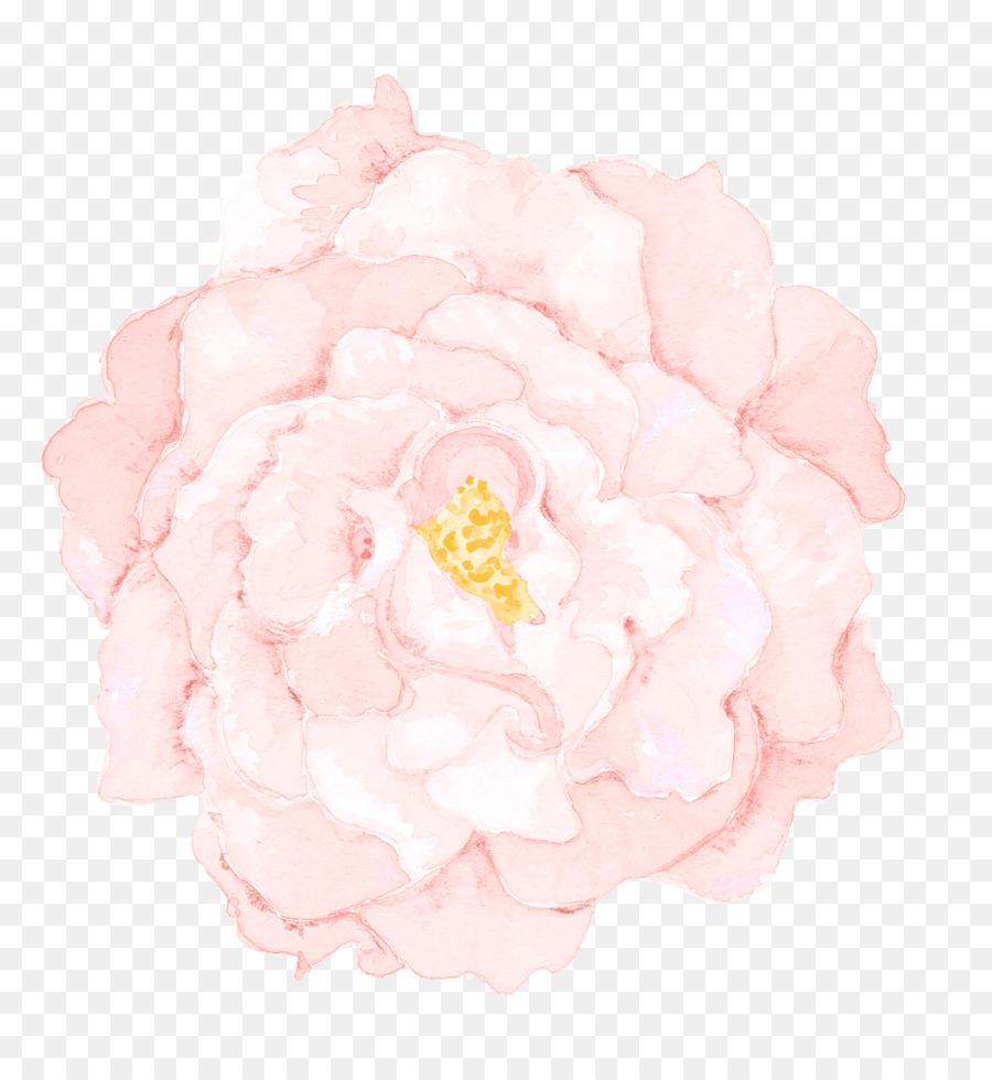 Descarga gratuita de Col Rosa, Las Rosas De Jardín, Peonía Imágen de Png