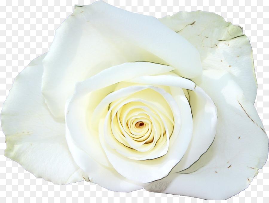 Descarga gratuita de Las Rosas De Jardín, Flor, Rosa Beach Imágen de Png
