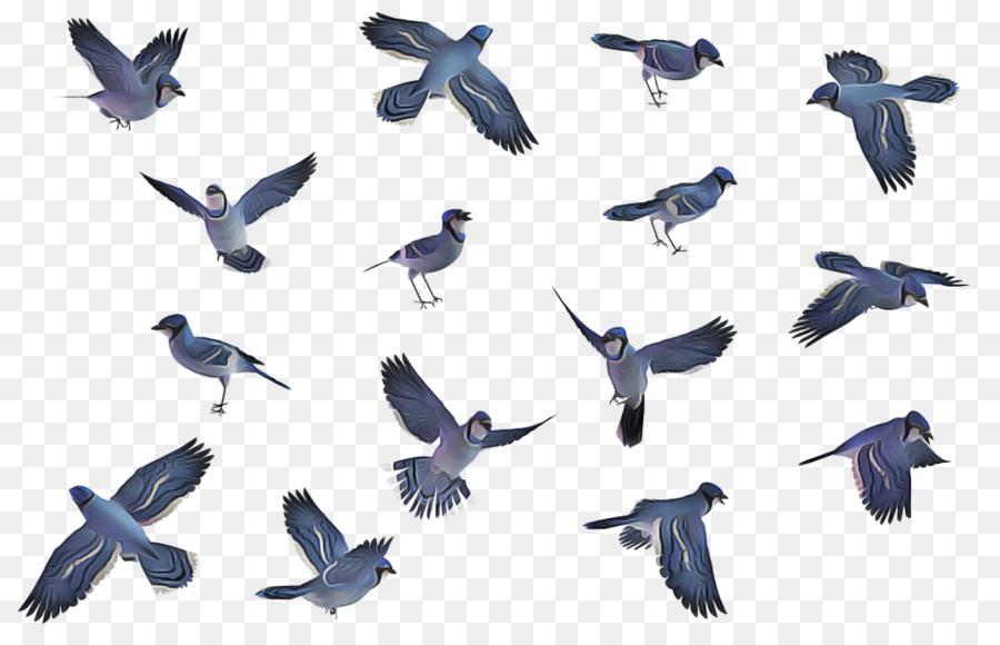 Descarga gratuita de Las Palomas Y Las Palomas, Pico, Aves Imágen de Png