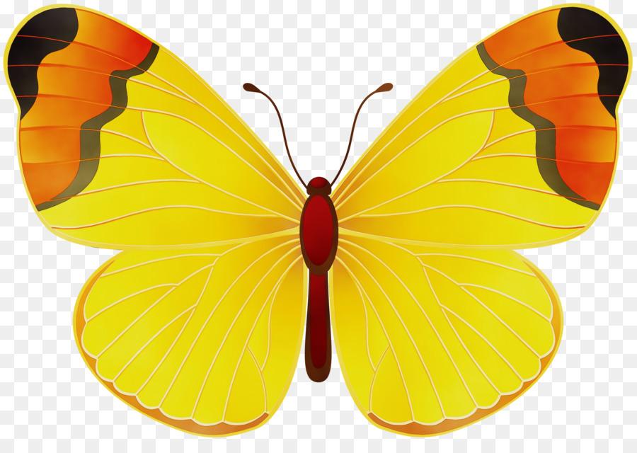 Descarga gratuita de Mariposa, Nublado Amarillo, Los Insectos imágenes PNG
